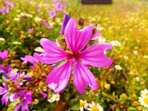 Vielen Dank für die Blumeeeeeen – vielen Dank – wie lieeeeb von Diiiir - Paralia – Greece
