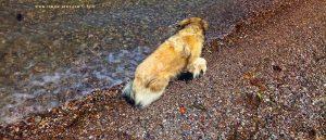 Nicol rollt nach dem Wälzen fast ins Wasser - Akti – Greece