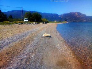 Nicol fühlt sich wohl - Akti – Greece