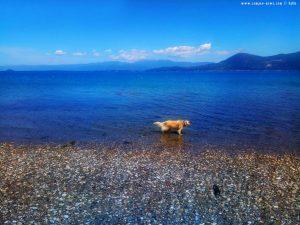 Nicol nimmt auch ein Fussbad - Akti – Greece