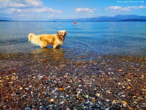 Nicol will mit aufs Bild - Akti – Greece