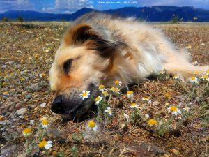 Nicol relaxing in Akti - Greece