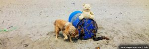 Der einarmige und nasenlose Teddybär am Korinos Beach – Greece