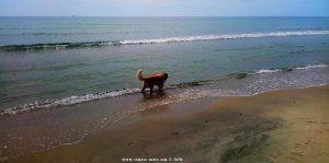Nicol nimmt ein Fussbad - Korinos Beach – Greece