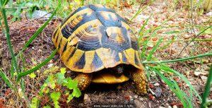 Schildkröte an der verlassenen Bar – Greece