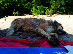 Nicol leistet mir Gesellschaft am River Arda - Kastanies – Greece