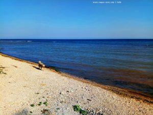 Nicol am Strand von Tuzla – Bulgaria