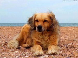 Nicol guckt grimmig - Krapets Beach – Bulgaria