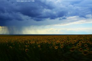 REGEN und Sonnenblumen - on the Road in Romania