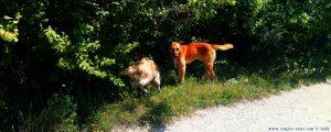 Wir haben nun zwei Hunde - Rezervația Acumularea Vișa - Ocna Sibiului – Romania