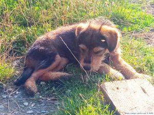 Puppy - Rezervația Acumularea Vișa - Ocna Sibiului – Romania