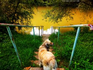 Mit Nicol auf Spaziergang am River Raab - Club Horgony - Körmend – Hungary