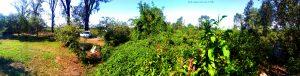 My View today - Rio Oglio - URAGO D'oglio – Italy