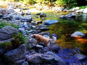 Nicol nimmt ein Fussbad im Fiume Pesio - Vigna – Italy