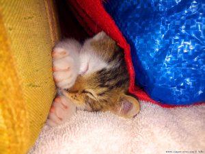 Lucky schläft noch immer in seinem Versteck - Vigna – Italy – 19:09