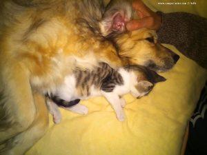 Nicol und Lucky schlafen zusammen - Casella – Italy