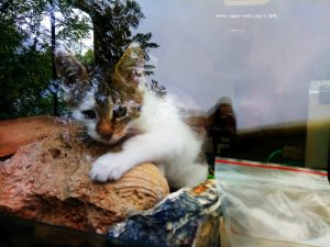 Lucky – die WoMo-Katze - on the Road – Italy