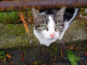 Katze in Torriglia - Genova - Italy – 769m