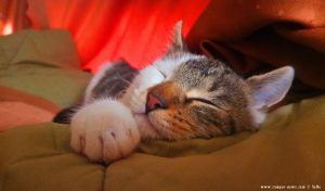 Lucky Schlafstudie - Casella - Genova - Italy – 410m – 11:36