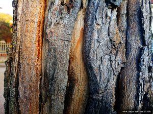 Interessanter Baum in Cinzano – Italy