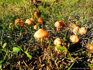Pilze in Cinzano – Italy