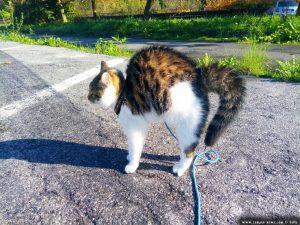 Begegnung mit einem Welpen - Lucky macht einen Katzenbuckel und der Schwanz ist aufgeplustert - Piazzale Giardini - Mondovì – Italy