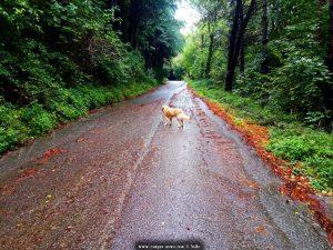 Mit Nicol auf Spaziergang - Parco del Peralto - Genova – Italy