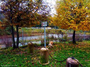 Eigentlich dürfen da keine Hunde hinein - Grünfläche hinter COOP in Busalla – Italy