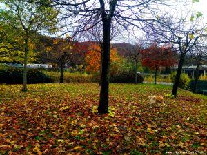 Es herbstelt gewaltig - hier in Busalla – Italy