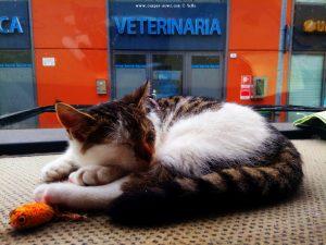 Noch schläft Lucky selig - Clínica Veterinaria – Busalla