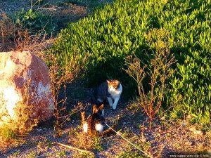 Die wilde Katze ist von Lucky eingeschüchtert - Platja de la Llosa – Spain