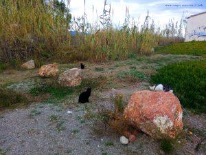 Lucky und die schwarzen Katzen - Platja de la Llosa – Spain