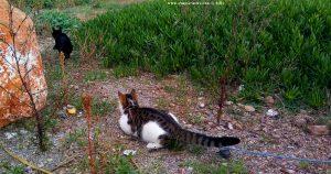 Lucky schlägt die schwarze Katze in die Flucht - Platja de la Llosa – Spain