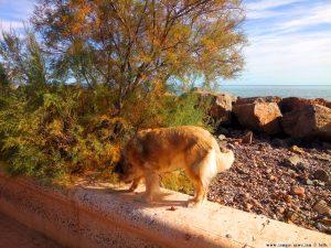 Mit Nicol auf Spaziergang - Platja de la Llosa – Spain