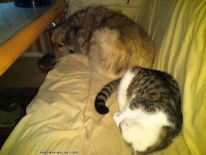 Lucky schläft wieder selig - und Nicol ist unentspannt - Platja la Garrofera – Spain