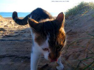 Lucky am Strand von Platja la Garrofera – Spain