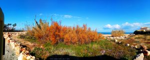 Inzwischen wieder fast komplett sonnig - Platja L'Almadrava – Spain