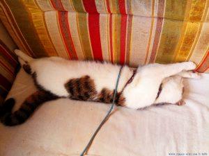 Lucky - Schlafstudie - Platja L'Almadrava - Spain