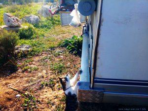 Da will Lucky an den Beutel mit dem Lammknochen - Platja L'Almadrava – Spain