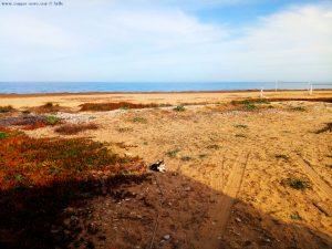 Lucky draussen - Platja L'Almadrava – Spain