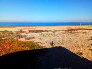 Lucky genießt die Aussicht - Platja L'Almadrava – Spain
