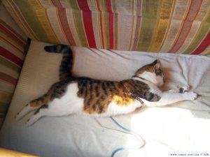 Lucky - Schlafstudie - Platja L'Almadrava – Spain