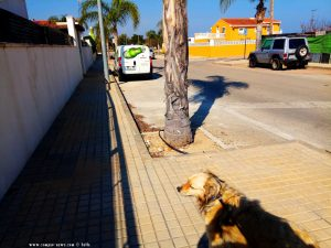 Mit Nicol auf Spaziergang - irgendwo in El Verger - Spain