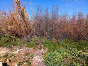 Lucky auf seinem Beobachtungsposten - Platja L'Almadrava – Spain
