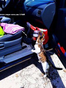Uiii - was ist da wohl drin - Lucky am Auto von Heidi am Platja L'Almadrava – Spain
