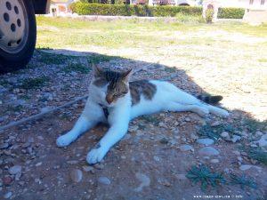 Lucky - Siesta im Schatten - Platja L'Almadrava – Spain