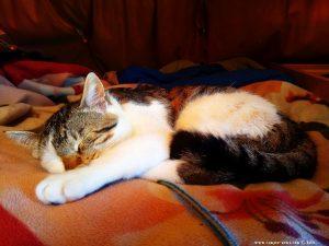 Lucky Schlafstudie - Platja L'Almadrava - Spain