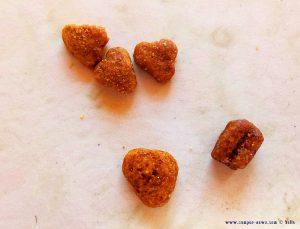 Trockenfutter von Heidi auf das Lucky so sehr abfährt - Platja L'Almadrava - Spain