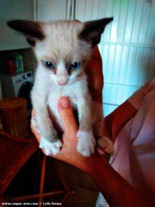 Vielleicht schon bald unser neues Kätzchen?