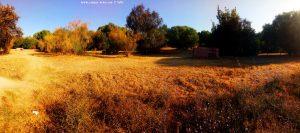 My View today - Las Doblas - Sanlúcar La Mayor - Spain